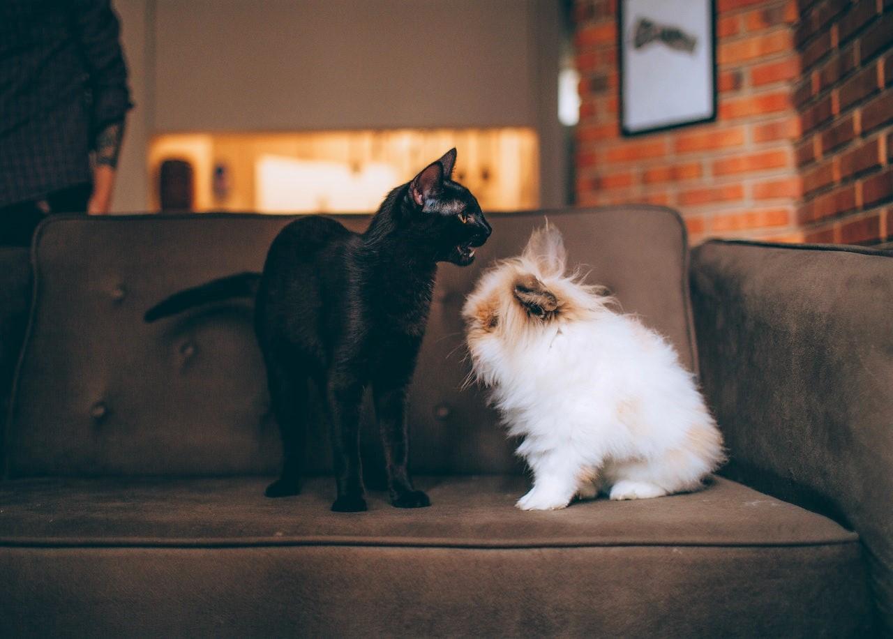 Chat et chien sur sofa